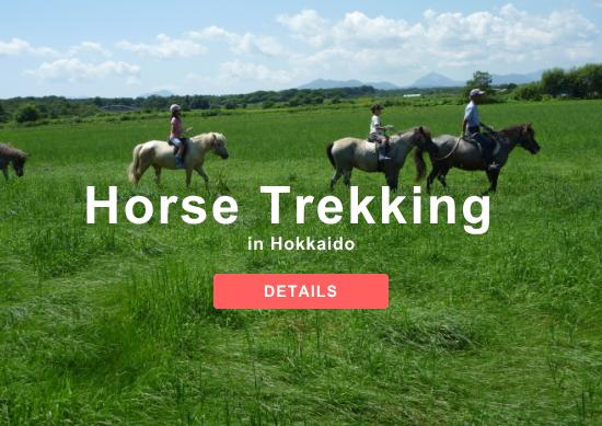 Horse Trekking